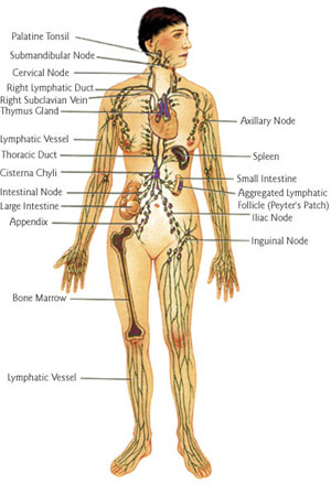 lymphaticdrainage